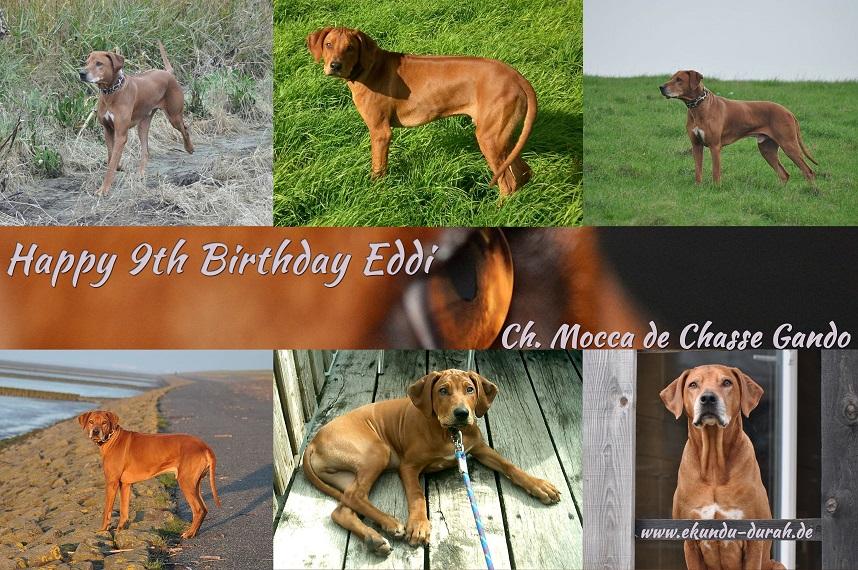Unser Eddi wird heute 9 Jahre alt!